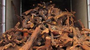 kayu-cendana