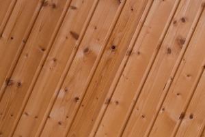 spruce-316002_1280